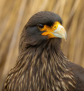 Birds of Prey Photography Contest in Association with Photocrowd 2021