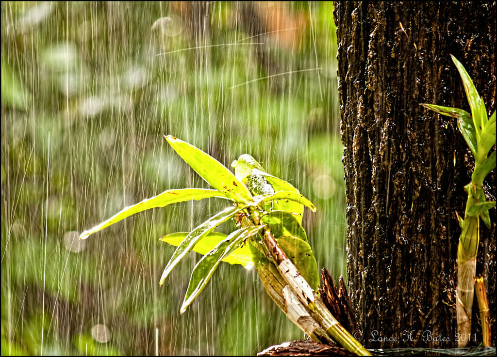 The Falling Rain Online Photography Competition by SteveG 2021